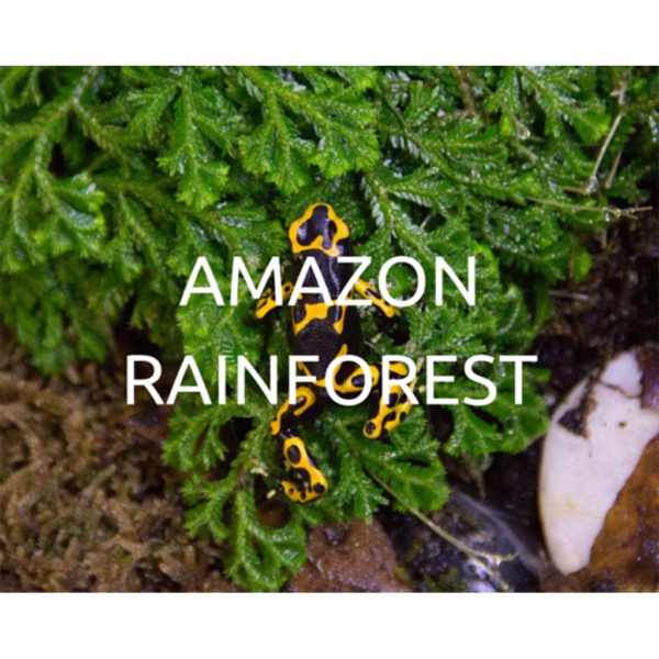 Help save the Amazon Rainforest by planting trees