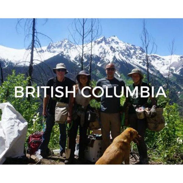 Plant trees in British Columbia to save the planet