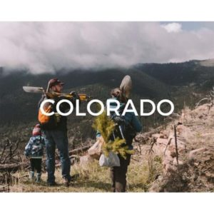 Help save Colorado by planting a tree today