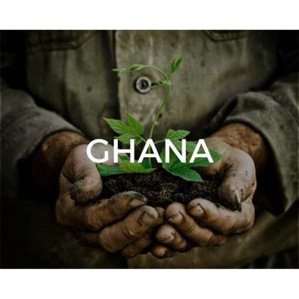 Plant a tree in Ghana