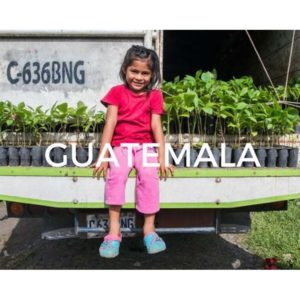 Plant a tree in Guatemala and help save earth!