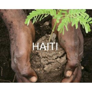 Plant a tree in Haiti and offset your CO2