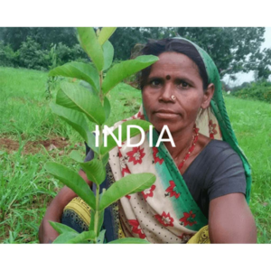 Plant trees in India