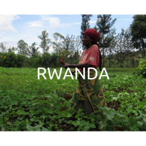 Plant a tree in Rwanda