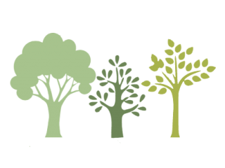 Reduce your carbon footprint by Planting a tree