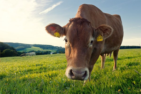 The grass-fed beef To Reduce your Carbon Footprint