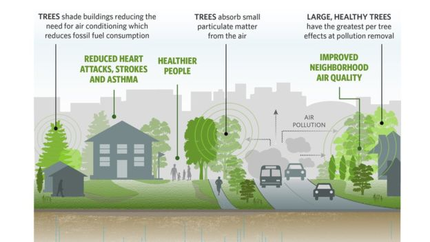 How do trees clean the air pollution
