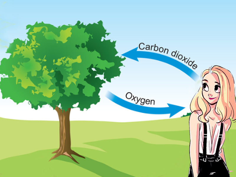 How Trees Reduce Air Pollution