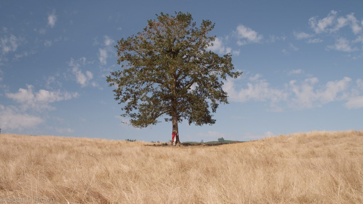 A beautiful Oak tree in a barren field planted as a gift to help combat climate change and deforestation.  A person is hugging the tree.