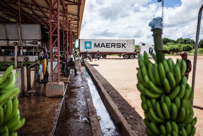 Carbon footprint of the banana supply chain